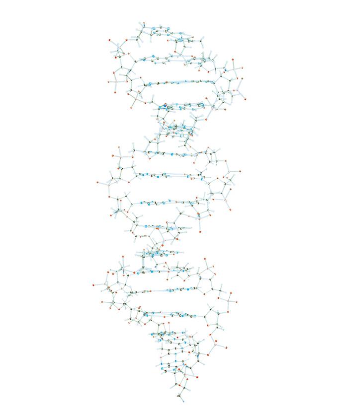Veliki DNA model