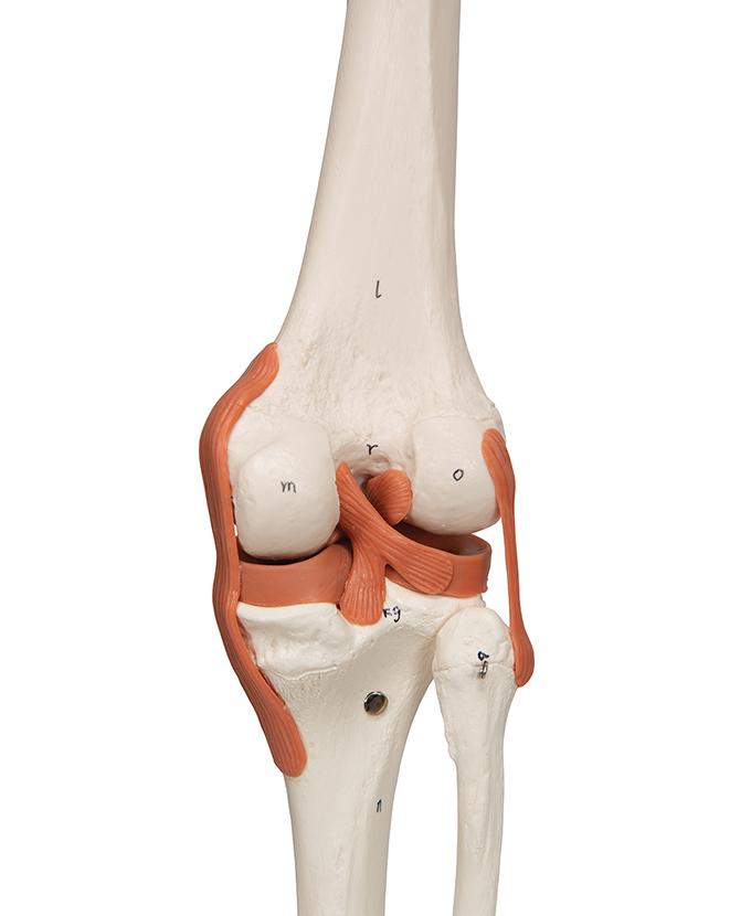 Kostur fleksibilan (A13-1)
