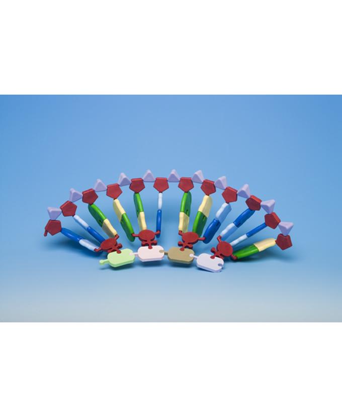 Sinteza proteina 331-2049