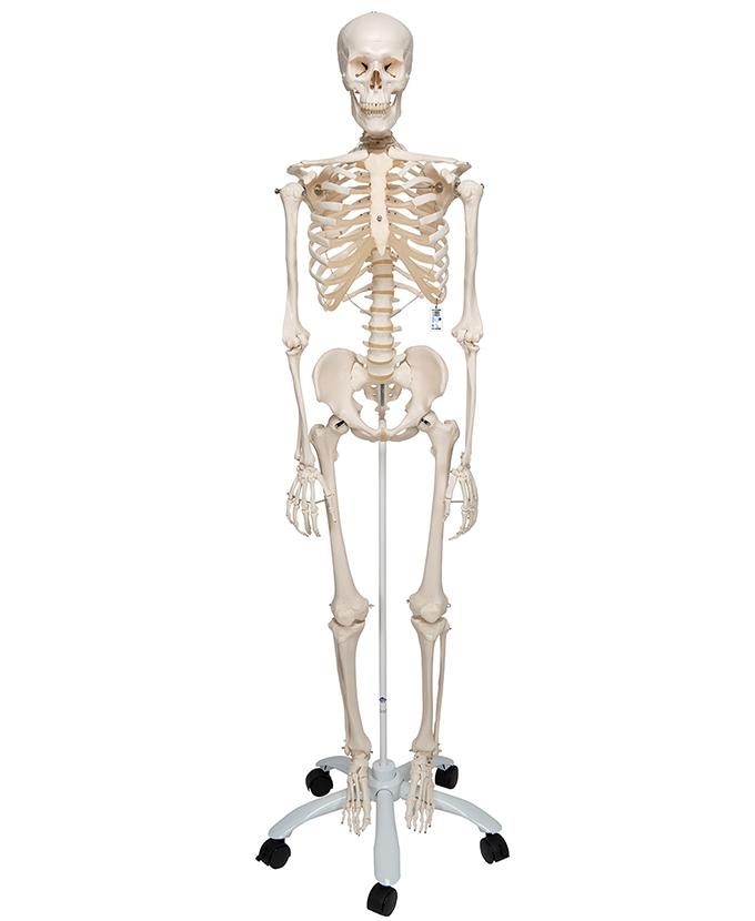 Kostur standardni (A10)