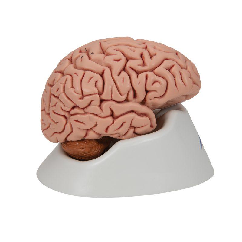 Mozak klasični (C18)