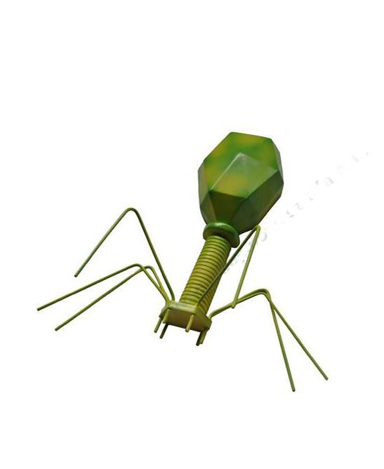 Model virusa - Bakteriofag