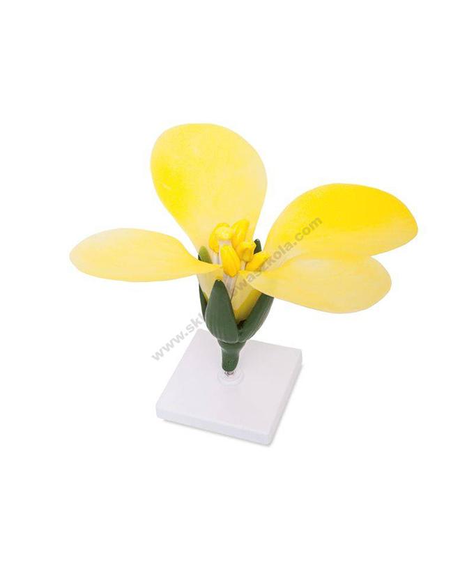 Model cvijeta