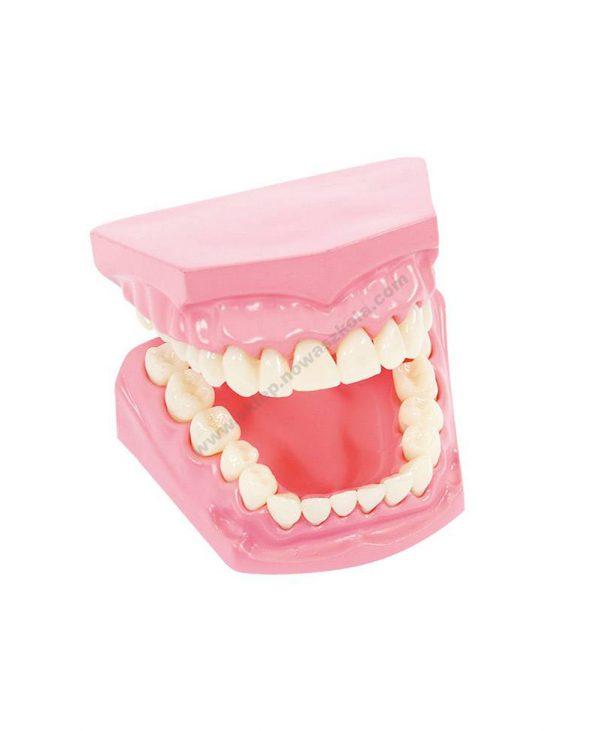 Model oralne higijene 3D