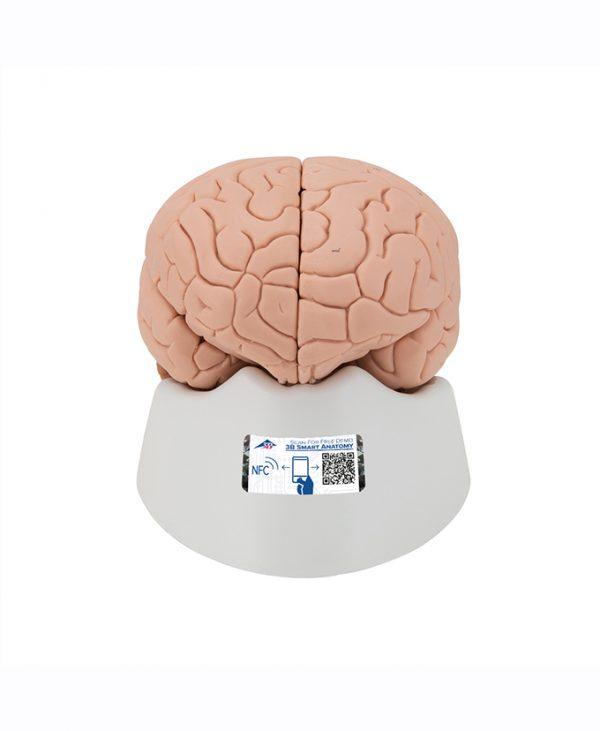Mozak 2 (C15)